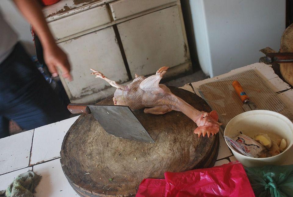 chicken-14090_960_720